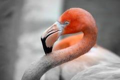 Zwarte wit en oranje Royalty-vrije Stock Afbeeldingen