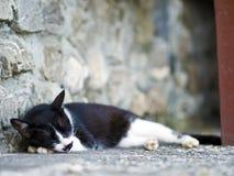 Zwarte witte binnenlandse kat Royalty-vrije Stock Foto