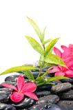 Zwarte zenstenen met rode bloemen Stock Fotografie