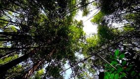 Zwarty bambusowy gaj, Chaung Tha, Myanmar zbiory