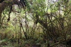 Zwarty górski tropikalny las Zdjęcia Stock