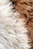 Zwarty gęsty białego i brown barankowego dywanika futerkowy krańcowy makro- obrazy stock