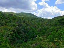 Zwarty gąszcz drzewa. Góry. Krajobrazowa natura. Afryka, Eth Zdjęcie Royalty Free