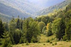 Zwarty halny las z widokami wąwóz, drzewa i mgła, obrazy royalty free