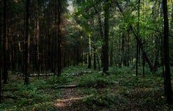 Zwarty las z spadać drzewami, krzakami i gąszczem, fotografia z ciemną, tajemniczą atmosferą, Fotografia Royalty Free