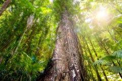 Zwarty lasowy baldachim przeglądać od ziemi zdjęcie stock