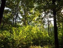 Zwarty porośle w lesie w jesieni zdjęcie stock