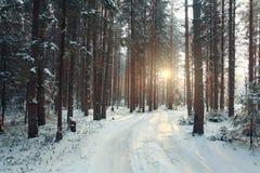 Zwarty sosnowy las w zimie Zdjęcia Stock
