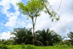 Zwarty tropikalny las przeciw niebieskiemu niebu obraz stock