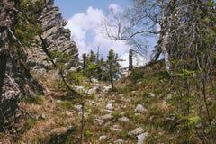 Zwarty wiosna las Zdjęcie Stock