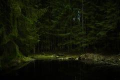 Zwartych sosen lasowa tekstura Lithuania Zdjęcie Royalty Free