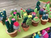 Zwełneni kaktusy Obraz Stock