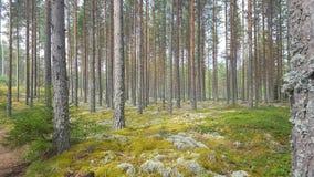 Zweeds bos stock foto