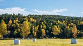 Zweeds landbouwbedrijf in de herfst 4 Royalty-vrije Stock Fotografie