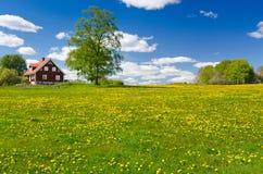 Zweeds landbouwbedrijf in Mei Stock Foto