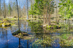 Zweeds moeras in bos Stock Foto