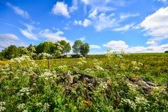 Zweeds Platteland Royalty-vrije Stock Foto