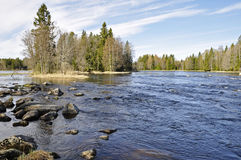 Zweeds zalmgebied Royalty-vrije Stock Afbeelding