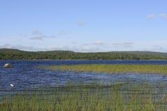 Zweedse oever van het meer Royalty-vrije Stock Foto
