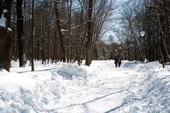 Zwei ältere Frauen, die in Winter-Wald im Tageslicht gehen Lizenzfreie Stockfotos