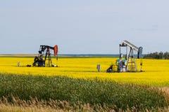 Zwei Öl Wells auf einem hellen gelben Canola-Gebiet stockfotos
