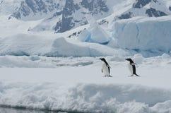 Zwei Adelie-Pinguine auf dem Eis unter Eisbergen. Stockbilder