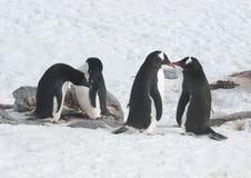 Zwei Adelie-Pinguine und gentoo zwei Pinguin. Stockbilder
