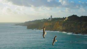 Zwei Adler, die über das Meer fliegen Stockfoto