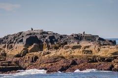 Zwei Adler nähern sich Ei-Felsen-Leuchtturm Lizenzfreie Stockfotos