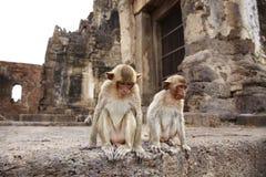 Zwei Affe und Altbau Stockbild
