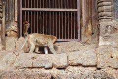 Zwei Affe und Altbau Lizenzfreies Stockbild