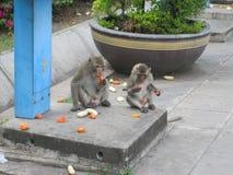 Zwei Affen auf der Straße in Lopburi/in Thailand Stockfotografie