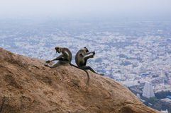Zwei Affen auf einem Felsen Lizenzfreie Stockfotos