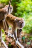 zwei Affen auf einem Zaun, Krabi Lizenzfreies Stockfoto