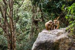 Zwei Affen des Dschungels Lizenzfreie Stockfotos