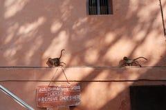 Zwei Affen, die auf dem Rohr laufen Lizenzfreies Stockfoto