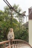 Zwei Affen, die auf der Brücke sitzen Stockfoto