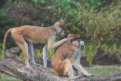 Zwei Affen im Zoo Lizenzfreies Stockbild