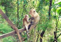 Zwei Affen Mutter und ihr Baby Stockbild