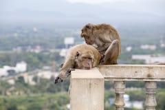 Zwei Affen sitzen im buddhistischen Tempel von Thailand Stockbilder