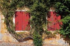 Zwei alte rote Fenster surronded durch eine Kriechpflanze Lizenzfreies Stockfoto