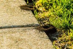 Zwei Ameisen, die den Hügel verlassen, um zu beginnen die Tage, arbeiten Stockfotos
