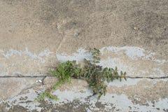 Zwei Anlagen, die kämpfen, um durch eine gebrochene Linie auf Zementboden zu wachsen Lizenzfreies Stockbild