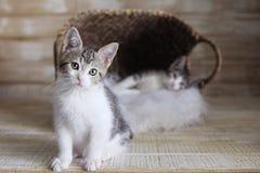 Zwei annehmbare Kätzchen in einem Korb Lizenzfreies Stockbild