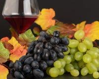 Zwei Arten Trauben: grün und rot mit Herbstgelb verlässt und lizenzfreies stockbild