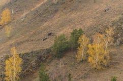 Zwei ATVs im Berg stockfoto