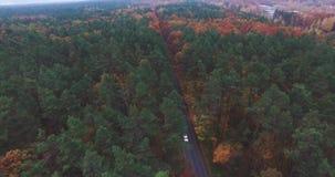 Zwei Autos bewegen sich entlang die Straße im Wald stock video