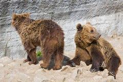 Zwei Bären Lizenzfreie Stockbilder