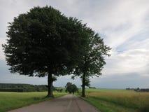 Zwei Bäume über dem blauen Himmel stockfotografie