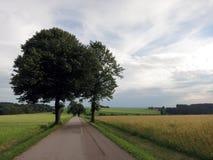 Zwei Bäume über dem blauen Himmel lizenzfreie stockfotos